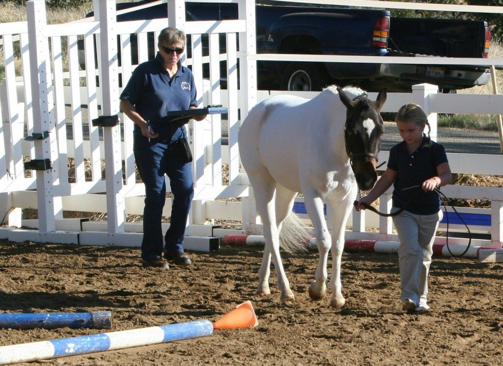 A sportpony filly named Amazing Gracie at her inspection owned by Stacey Sandstrom