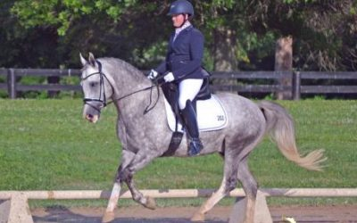 NASPR Stallion Magnum at the 2016 NDPC