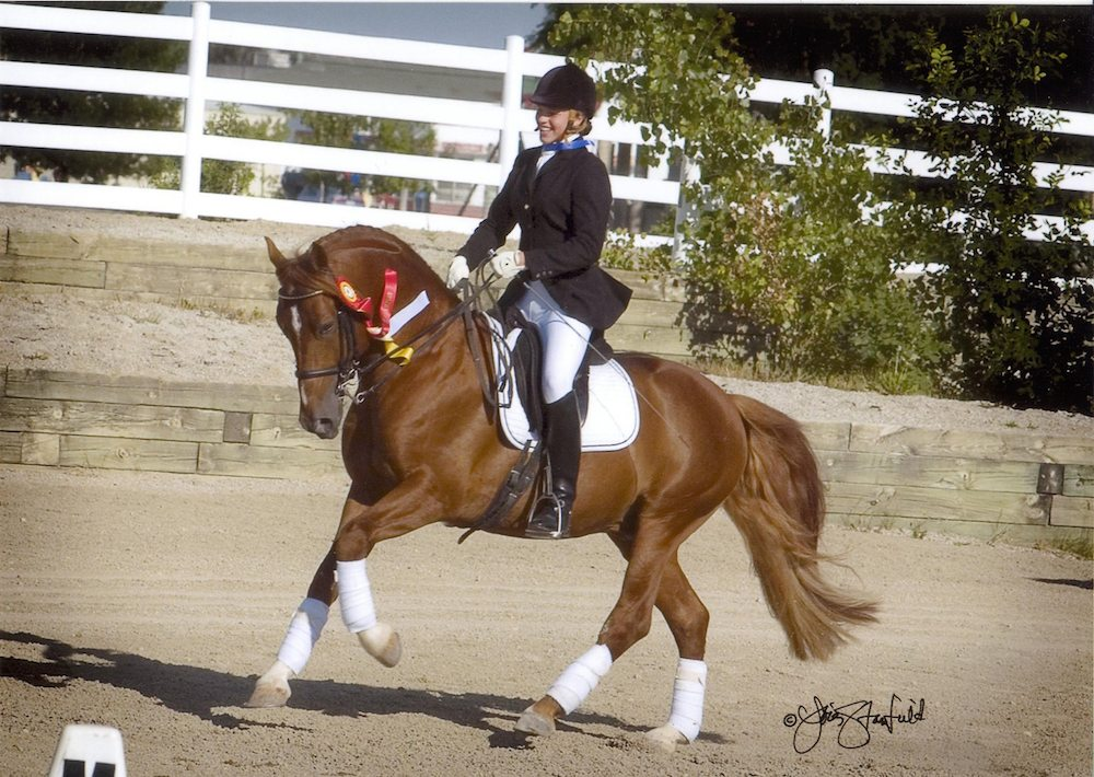 The pony stallion Mushu owned by Jana Wagner is a successful dressage pony registered with the North American Sportpony Registry