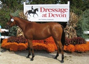 Dressage at Devon photo